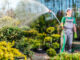 Ogród idealny