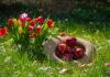 Sadzenie kwiatów cebulowych jesienią