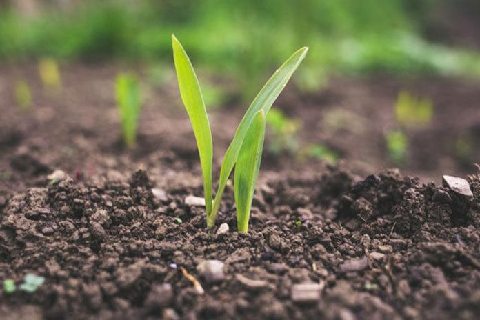 Gdzie kupować odpowiednio dopasowane preparaty rolnicze